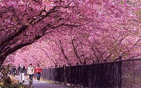 伊豆で食べておいしい♪♪見て楽しめる♪♪春を感じてみてみませんか?